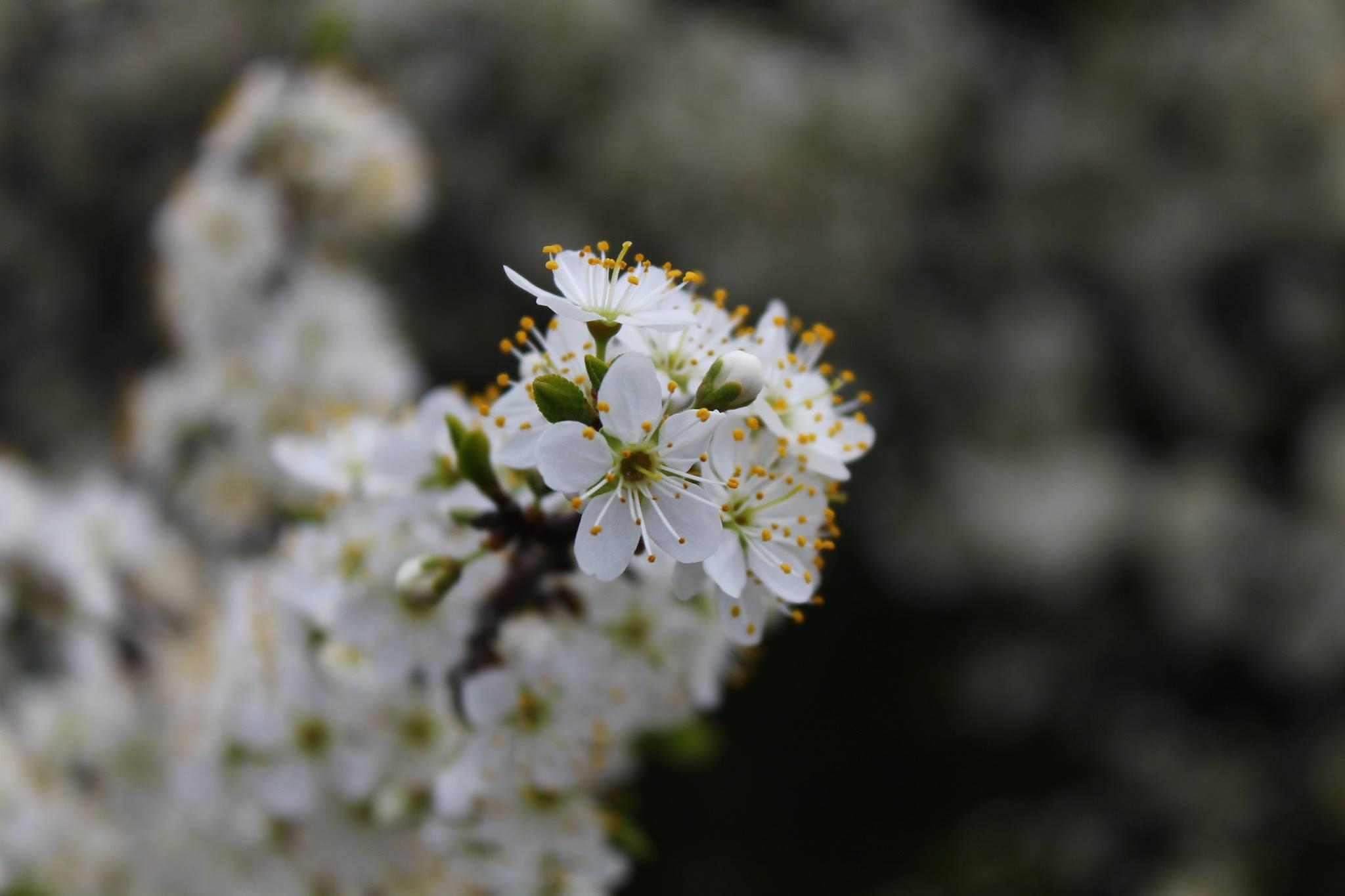 Пролетни празници